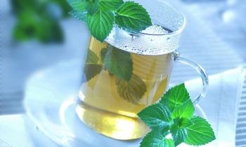 plantes-et-automedication